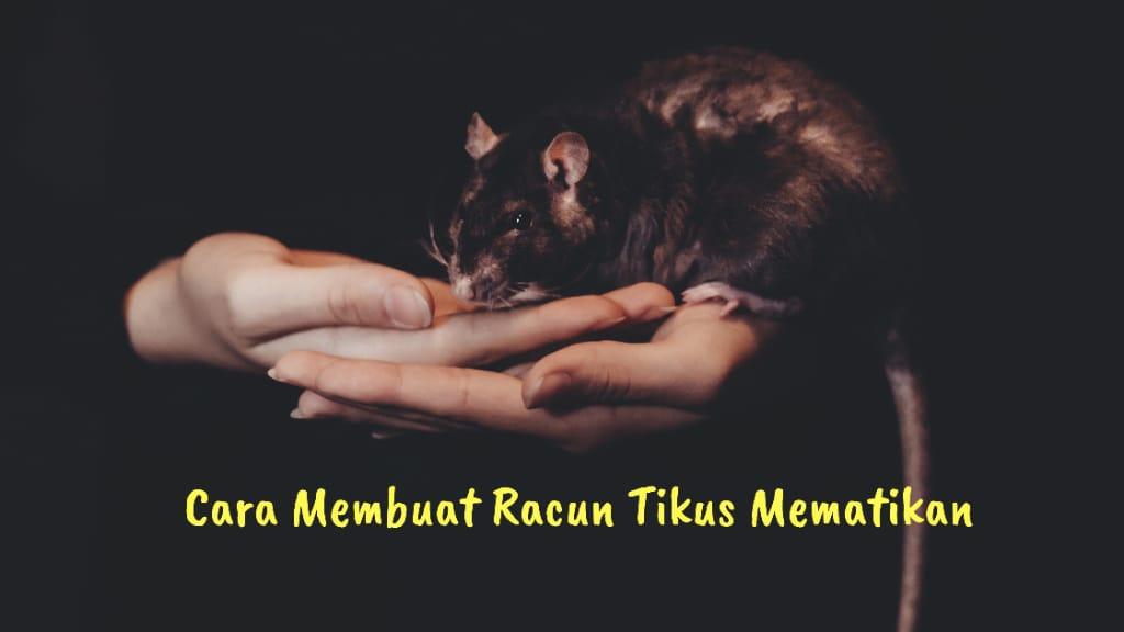 Cara membuat racun tikus mematikan